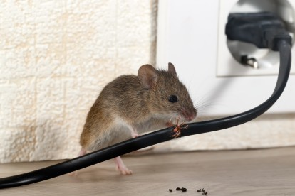 Pest Control in Rickmansworth, Chorleywood, Croxley Green, WD3. Call Now! 020 8166 9746